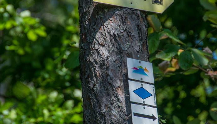 Baum mit Kennzeichnung der Wanderwege