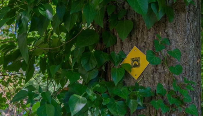 Baum mit Kennzeichnung des Burgenweges