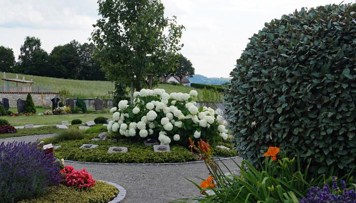 Gärtnergepflegtes Grabfeld auf dem Friedhof